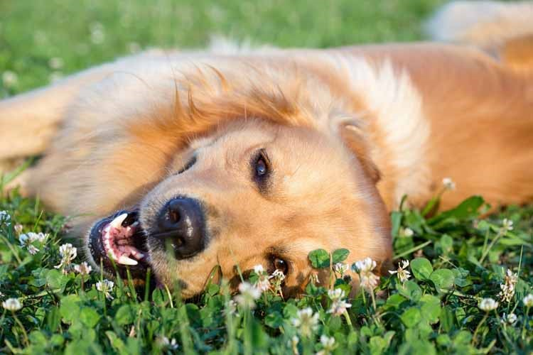spring cleaning tips for dogs