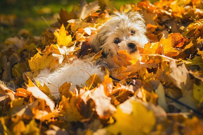 Fun Fall Activities To Do With Your Dog