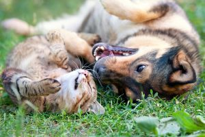 Misconceptions About Pet Sitters