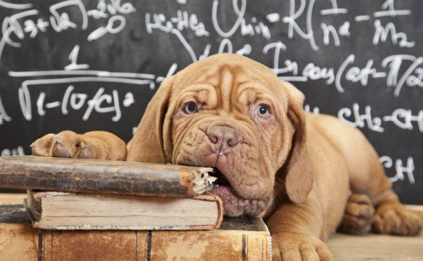 Should your dog go back to school this Fall?