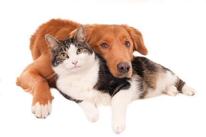 Yes, Cats and Dogs Can Get Along