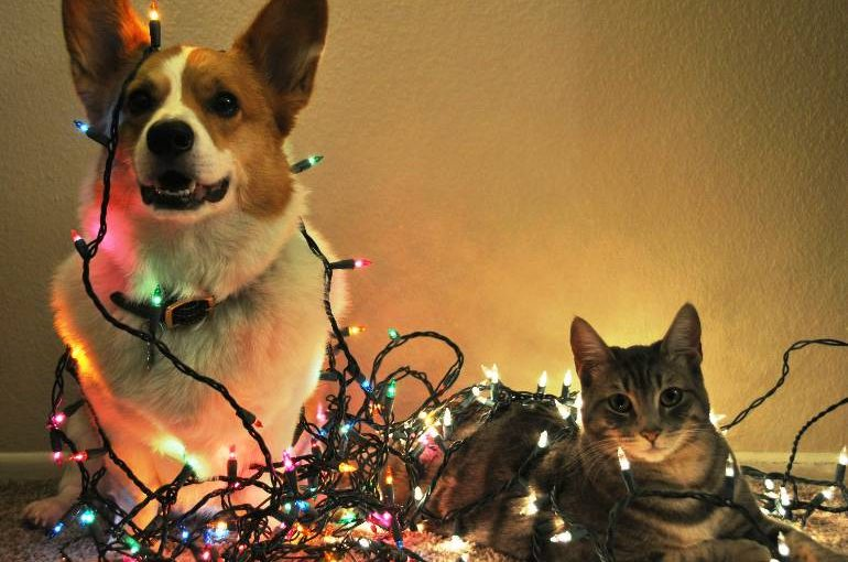 3 Reasons to Consider a Pet Sitter This Holiday Season