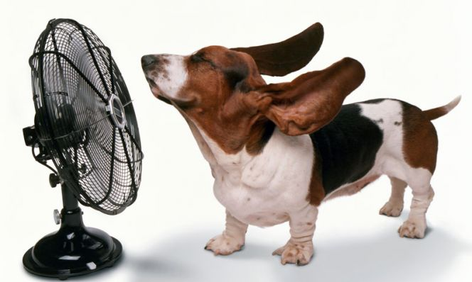 How to Keep Your Pet Safe and Cool This Summer