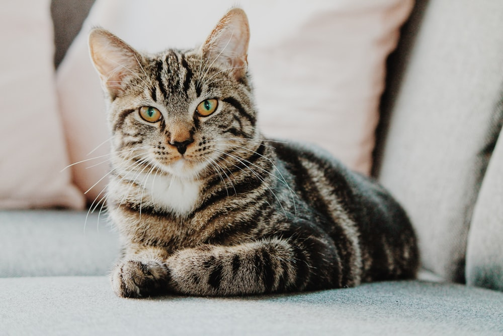 5 Signs Your Cat Could Be Sick